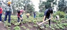 Agricultura en Ecuador